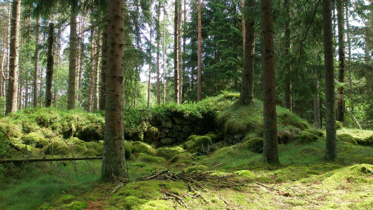 Ett husröse i skogen.