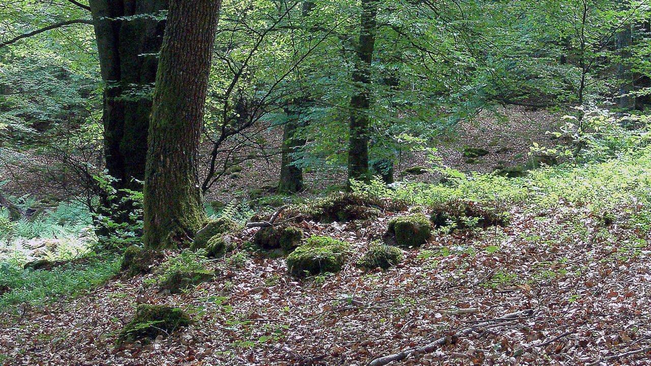 Lövskog med kulturlämningar